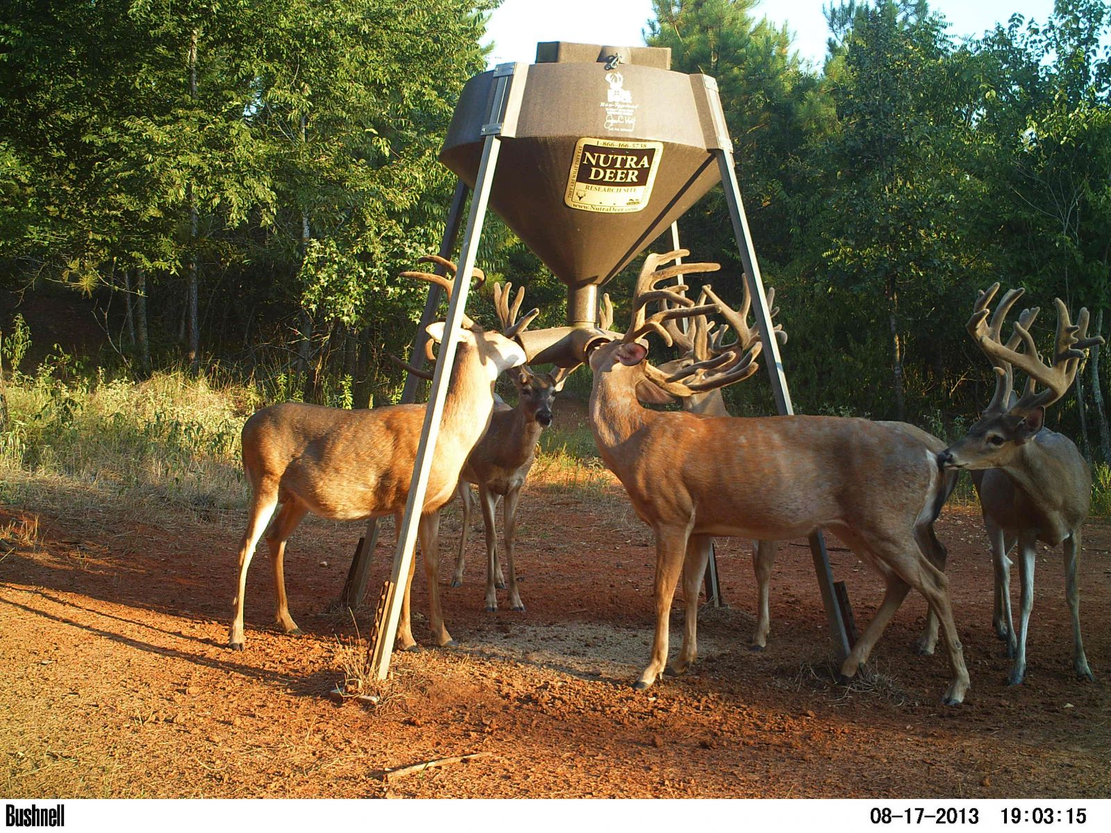 calf creep com for photo boss feeder calves feeders x of buck designsbyemilyf deer