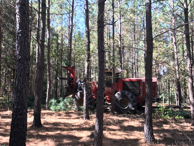 A feller-buncher harvesting selected trees for our thinning.