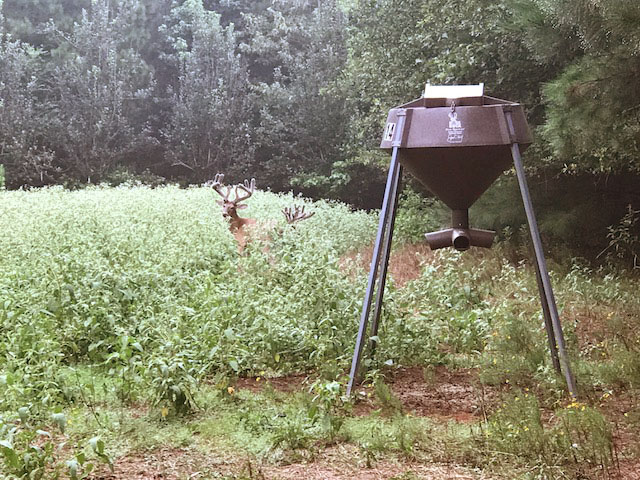 Bucks using the Dr. Deer Boss Buck Feeder we helped design.